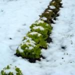salade ss neige - copie