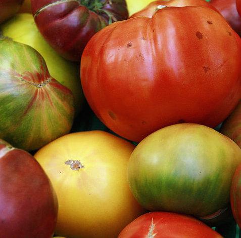 Quand commence la saison des tomates mes courses la - Quand repiquer les tomates en pleine terre ...
